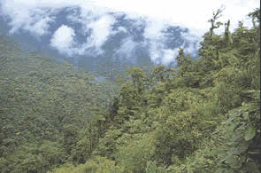 The altitude range in the park gives rise to a great variety of forest species.
